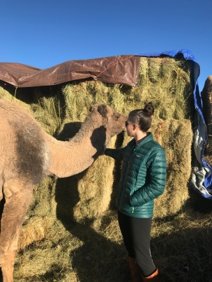 Danielle, the camel whisperer